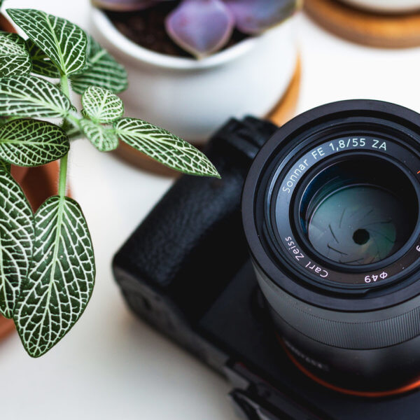 kamera-pflanze